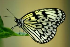 butterfly 2x3